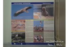 """Информационна табела за проект """"Помощ за египетския лешояд"""" в новата експозиция на РИМ-Русе"""