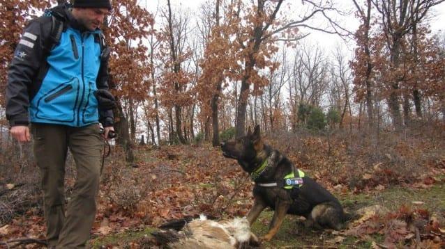 Нови случаи на загинали белоглав и черен лешояд в Източните Родопи