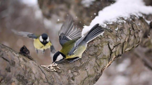 """1362 хранилки даряваха """"Зрънце любов"""" на дивите птици за девета поредна година"""