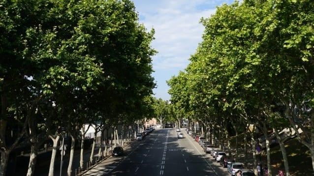 Отбелязваме Световния ден на гората с призив за устойчиви градове