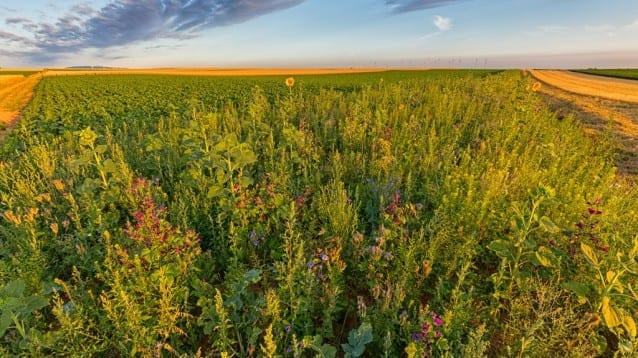 Крайният вариант на доклада за ОСП отрича кризата в околната среда и биоразноообразието в земеделските земи на Европа