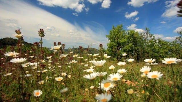 Днес отбелязваме Деня на Натура 2000 с призив към българските институции за нейното опазване