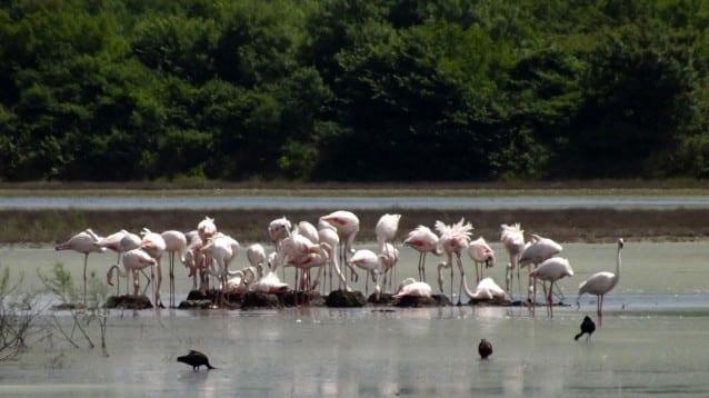 Един рай за птиците под заплаха от изчезване