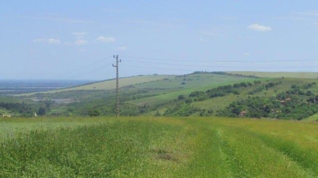 Керкенез, гарван и сойка са сред жертвите открити под електрически стълбове в Западна България