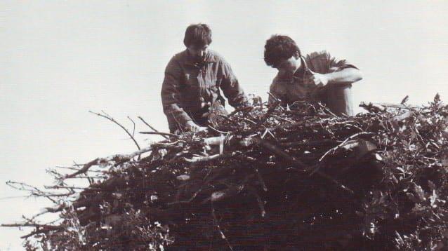 Петър Янков - Гнездо на черен шелояд