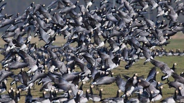 Шест града в България със събития за Европейските дни на птиците