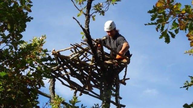 Нови изкуствени гнезда привличат изчезналия преди десетилетия черен лешояд в Източните Родопи