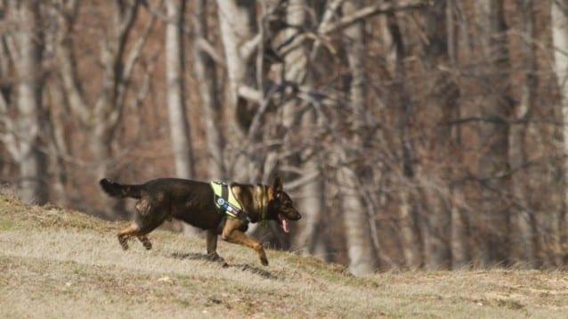 Кучето за борба с отровите Барс помогна за откриването на убит от бракониери елен