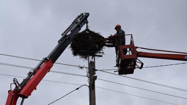ЧЕЗ Разпределение стартира монтирането на елементи по мрежата за защита на птиците