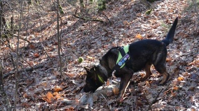 Нов случай на тровене застрашава здравето на хора и животни в Крумовградско