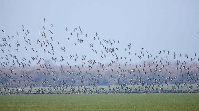 """Случаят """"Калиакра"""" – нова препоръка на Бернската конвенция иска България да ускори премахването на пагубното въздействие на ветрогенераторите върху птиците"""