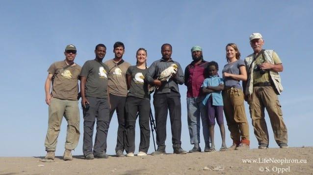 Поставихме сателитни предаватели на седем египетски лешояда в Етиопия