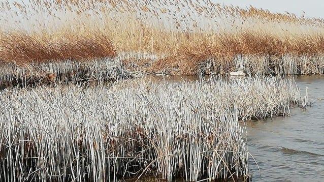 Драстичен спад на водното ниво на Шабленски езерен комплекс
