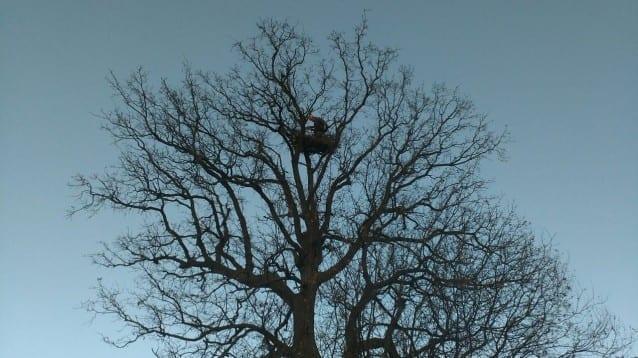 Нова двойка царски орли зае изкуствено гнездо, построено от БДЗП