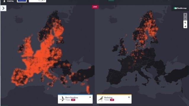 Нова платформа визуализира на живо движенията на птиците в цяла Европа