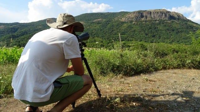 72 белоглави лешоядчета се излюпиха в Източните Родопи
