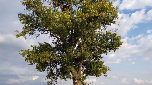 Нови 14 изкуствени гнезда за царските орли