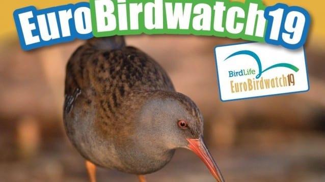 Отбелязваме Европейските дни на птиците в шест града в страната