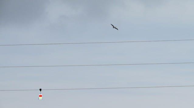 Безопасен полет за пеликаните на остров Персин