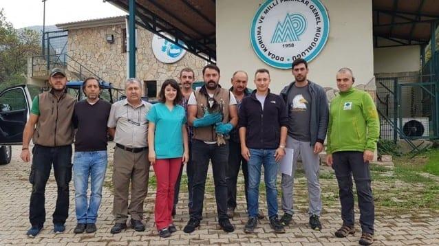 Обединени усилия за спасението на един египетски лешояд – историята на Анна