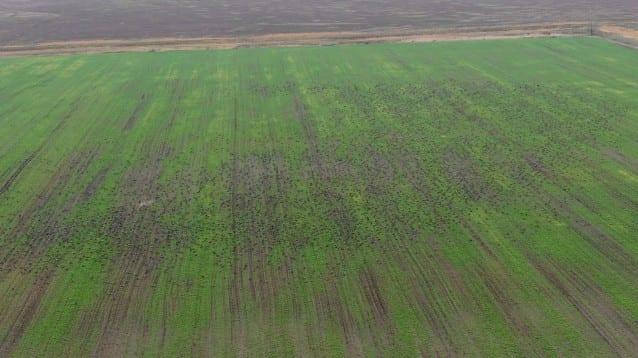 18 000 червеногуши гъски са установени на второто координирано преброяване