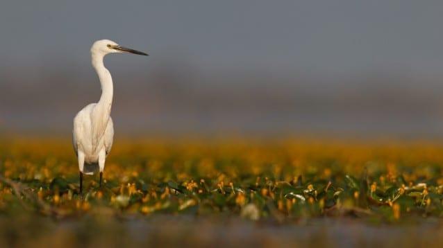 Официален старт на Граждани за природата