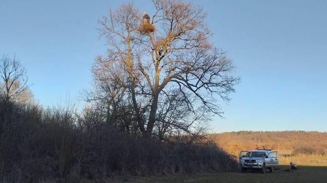 """Инсталирахме всички 40 изкуствени гнезда, предвидени по проекта """"Земя за царския орел"""""""