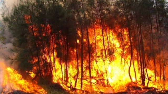 1 милиард животни, жертви на пожарите в Австралия