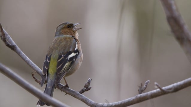 Общо 70 човека учат как да определят и наблюдават птици онлайн в условия на извънредно положение в страната
