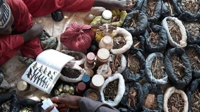 Предприемане на действия за борба с незаконната търговия с диви животни в Африка