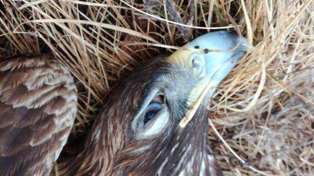 За първи път дело за незаконно използване на отрови в дивата природа достигна до съдебен процес в Хърватия