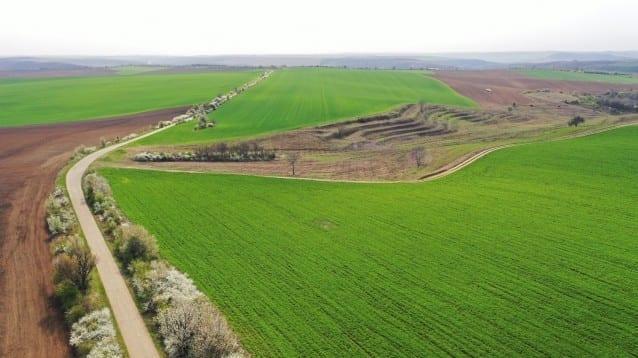 Анализ на въздействието на употребата на пестициди върху египетския лешояд в България
