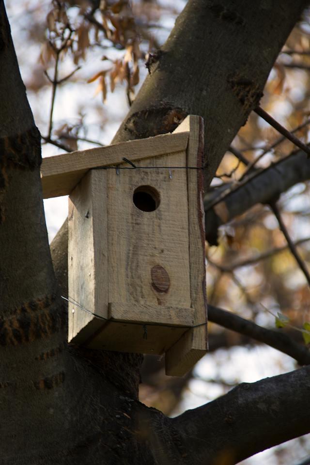 Как да си направя къщичка за птици