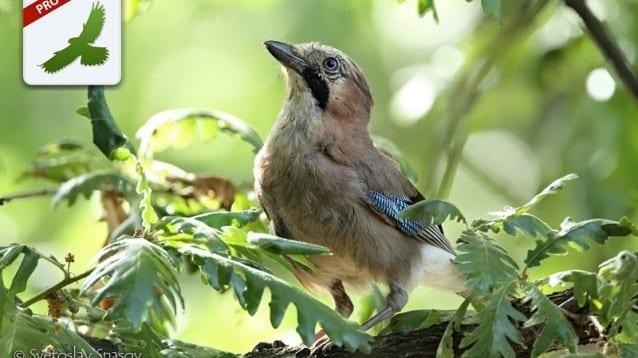 SmartBirds се включва в Световния уикенд за наблюдение на птици