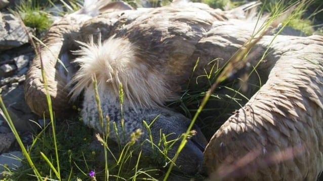 Проектозакон предвижда да легализира използването на отрови в дивата природа и други неселективни методи за лов