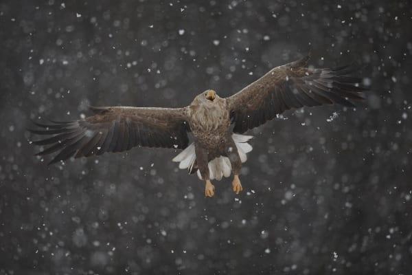 © Богдан Боев/Морски орел