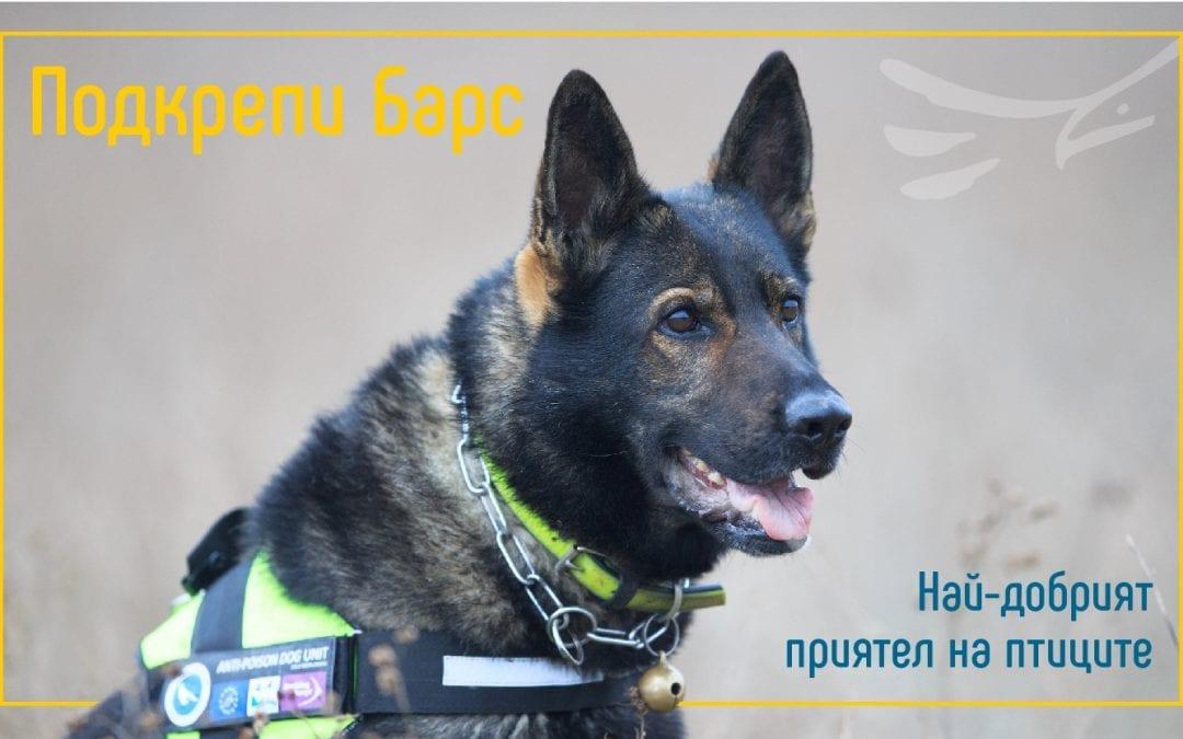 Стартира кампания в подкрепа на единствения в страната екип с обучено куче за борба с отровите в дивата природа