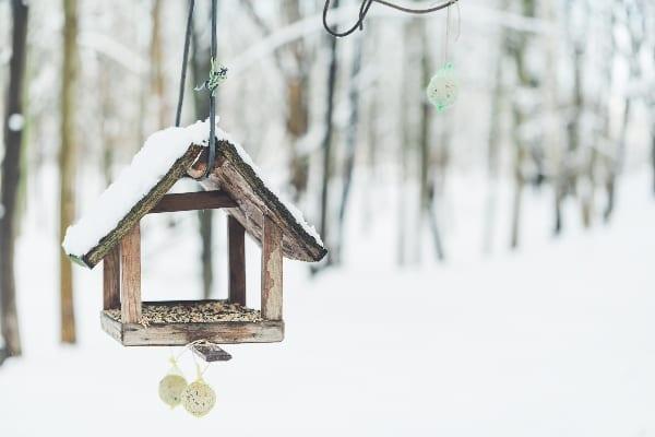 birdhouse-bird-feeder-winter-park