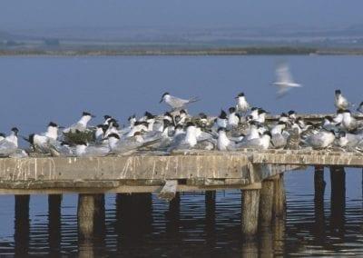 Остров за дивите птици ще бъде изграден във Варненското езеро