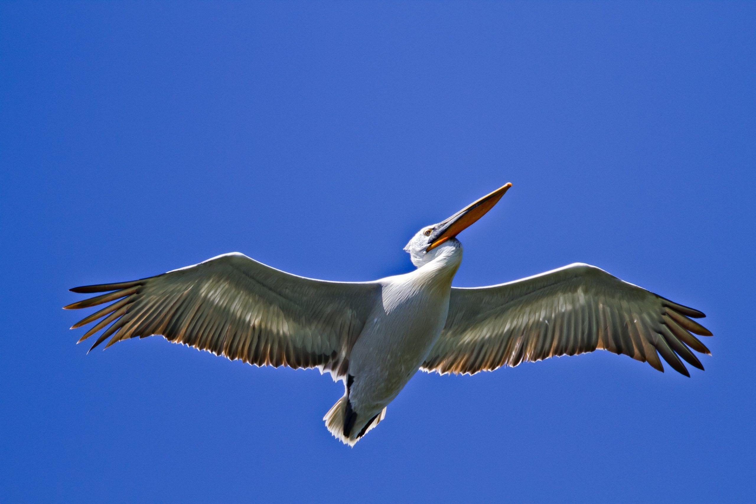 """Резултати от конкурса за лого на LIFE проекта ''Безопасен полет за птиците на Дунав"""""""