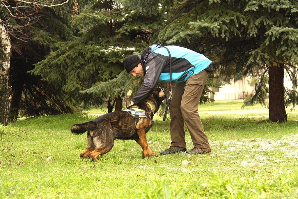 Ники и Барс – четири години борба с отровите в България
