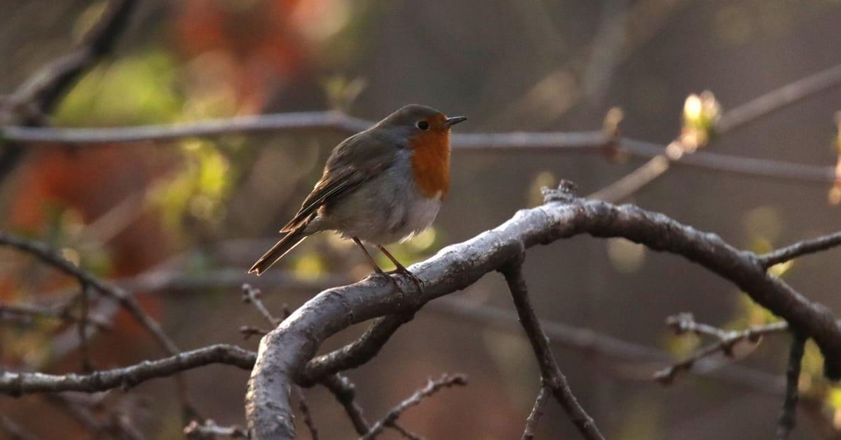 Пролетта идва: стани изследовател със SmartBirds и БДЗП