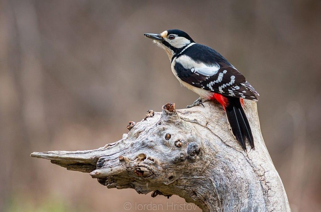 Птиците се броят… напролет!