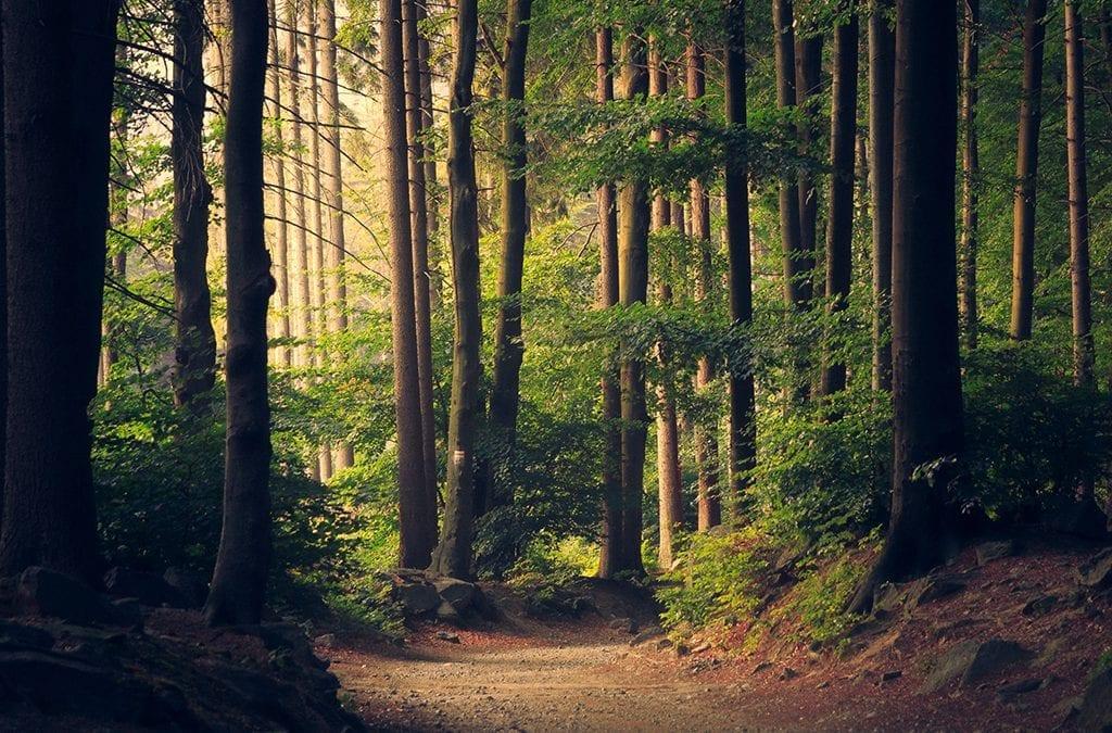 Отбелязваме Международния ден на горите с призив към тяхното възстановяване