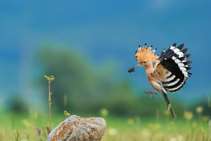 Започваме подготовка на второто издание на Атлас на птиците в България