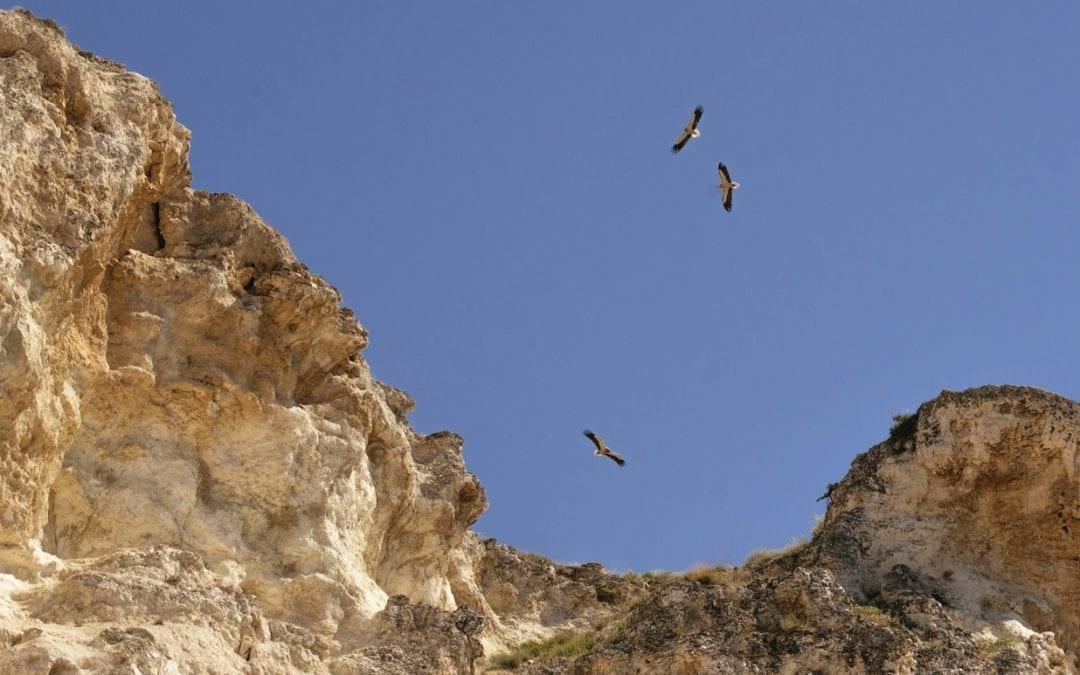 Зачестяват случаите на безпокойство над застрашени видове птици
