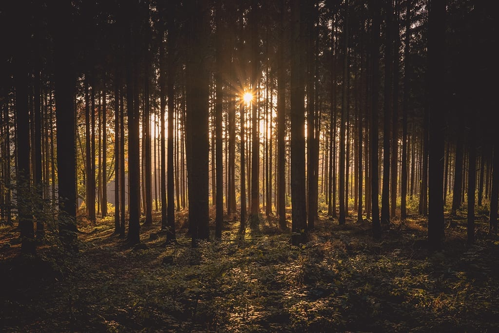 """В ,,Седмицата на гората"""" разкриваме седем тайни, които горите крият от нас"""
