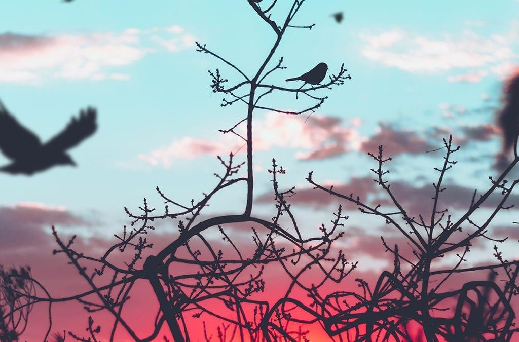 Силуети на птици