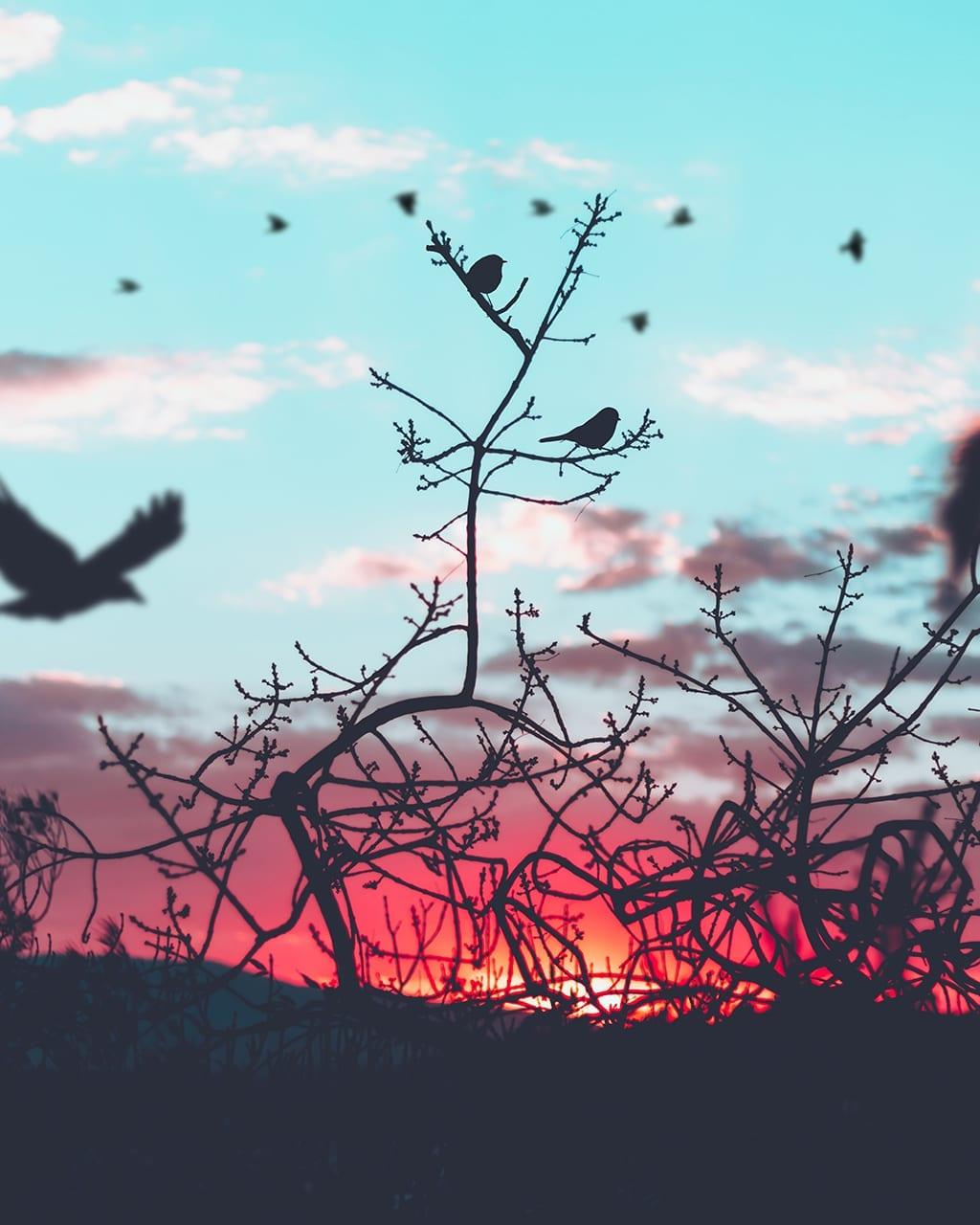 Празнуваме Международния ден на птиците
