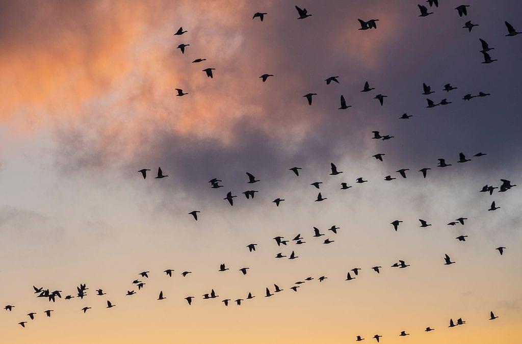 Резултати от есенната миграция на птиците, 2004